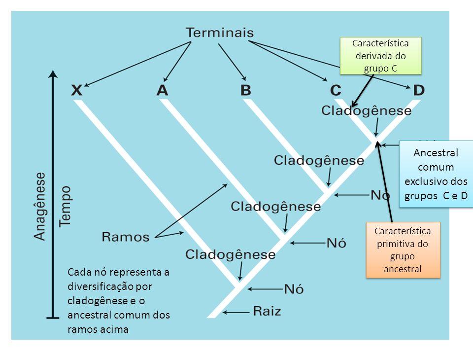 Ancestral comum exclusivo dos grupos C e D