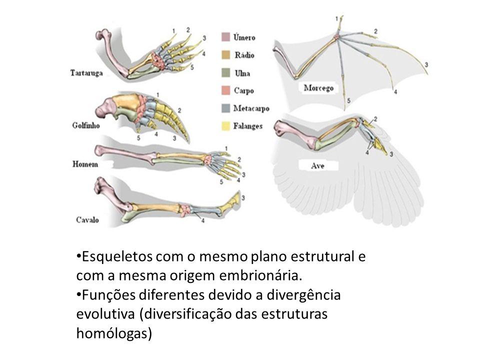 Esqueletos com o mesmo plano estrutural e com a mesma origem embrionária.