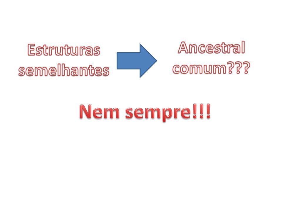Estruturas semelhantes