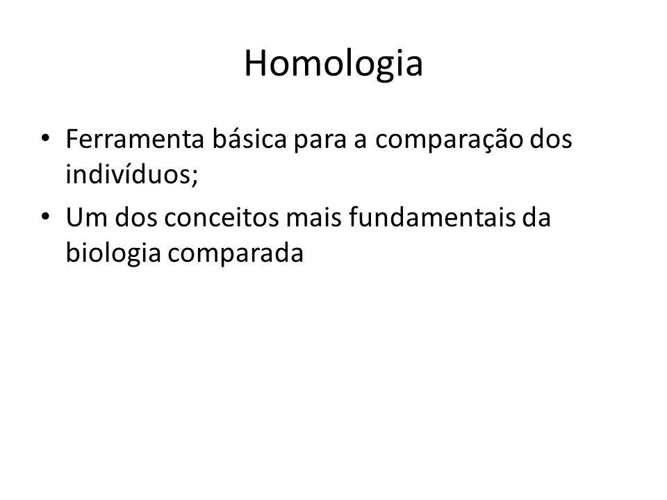 Homologia Ferramenta básica para a comparação dos indivíduos;