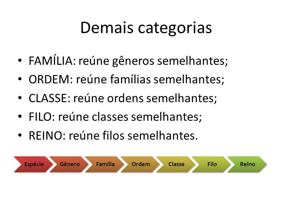 Demais categorias FAMÍLIA: reúne gêneros semelhantes;