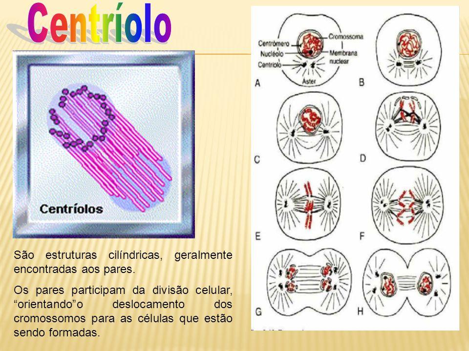 Centríolo São estruturas cilíndricas, geralmente encontradas aos pares.
