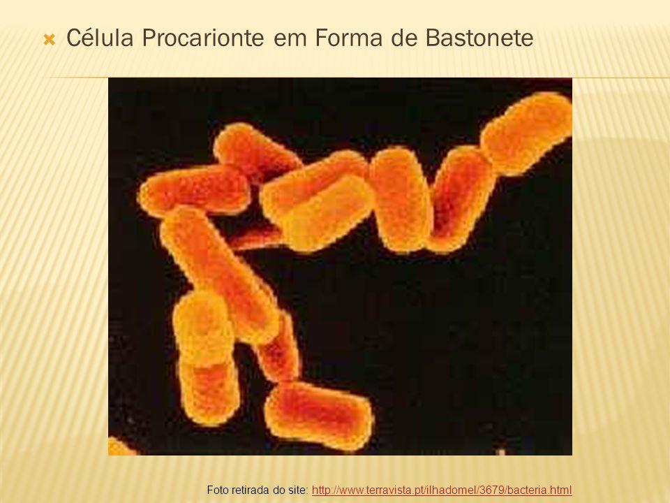 Célula Procarionte em Forma de Bastonete