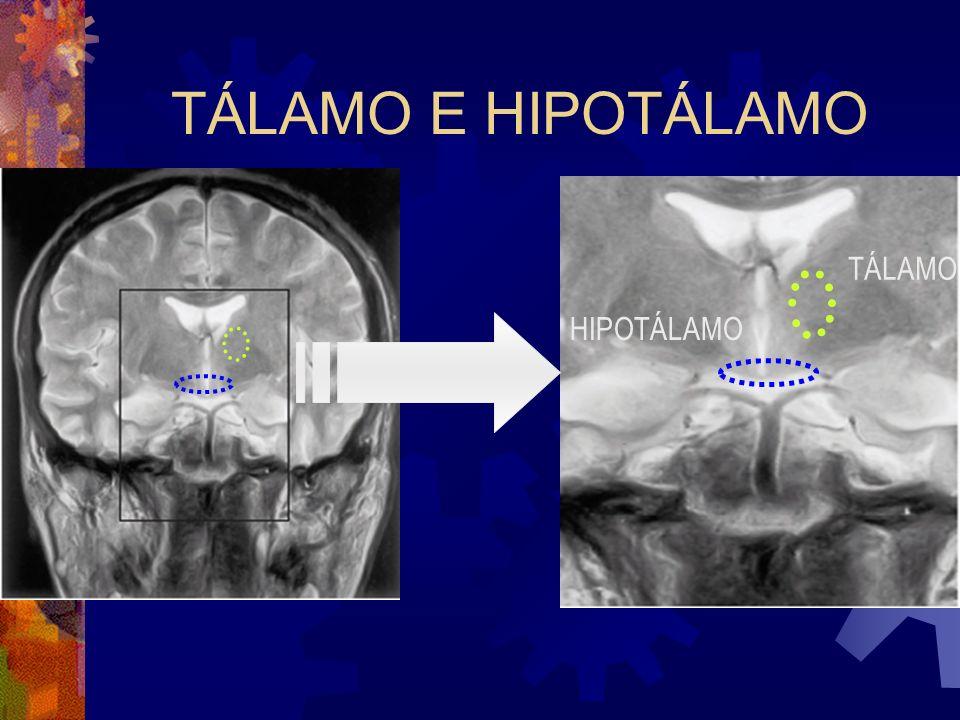 TÁLAMO E HIPOTÁLAMO TÁLAMO HIPOTÁLAMO