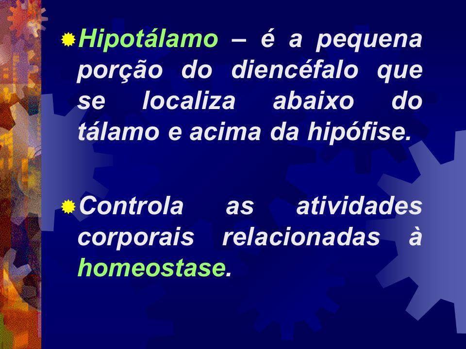 Hipotálamo – é a pequena porção do diencéfalo que se localiza abaixo do tálamo e acima da hipófise.