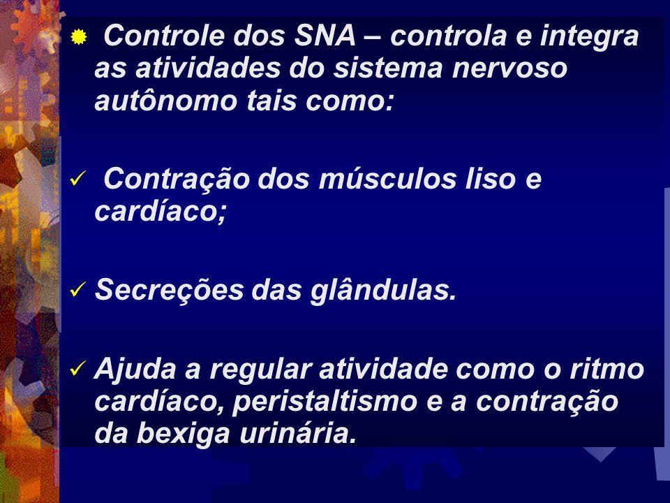 Controle dos SNA – controla e integra as atividades do sistema nervoso autônomo tais como:
