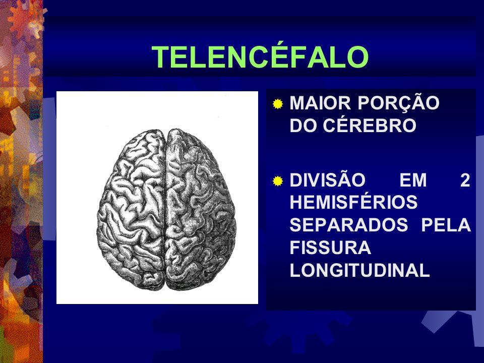 TELENCÉFALO MAIOR PORÇÃO DO CÉREBRO