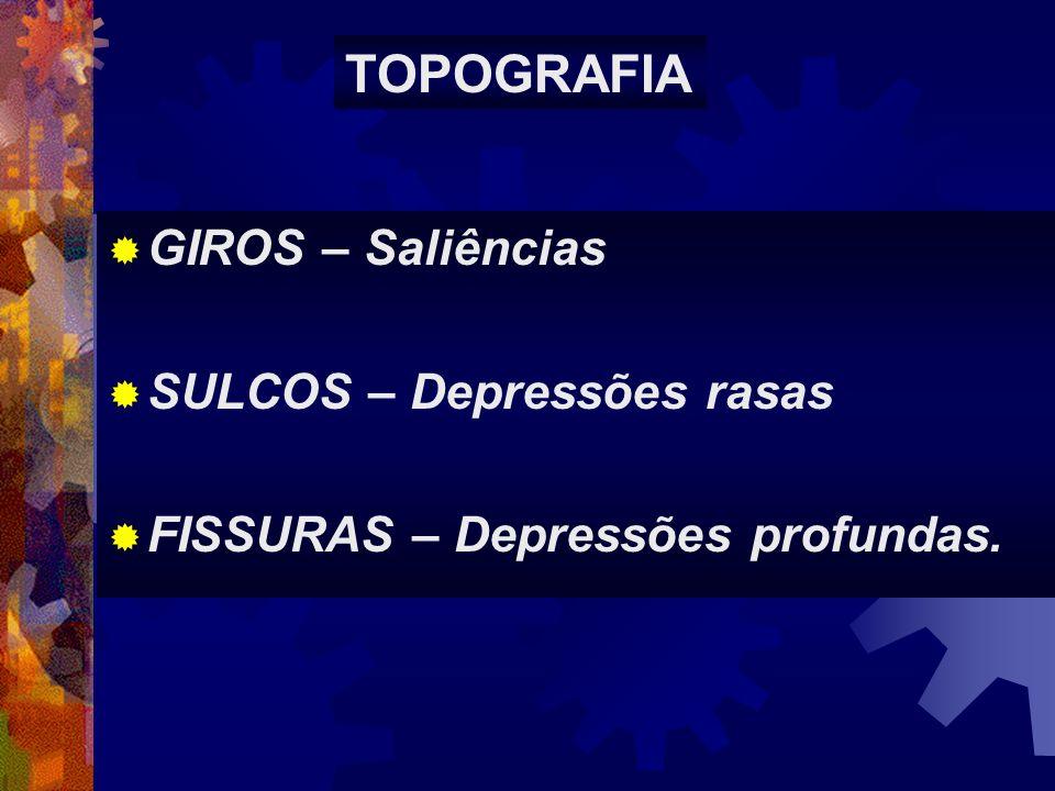 TOPOGRAFIA GIROS – Saliências SULCOS – Depressões rasas