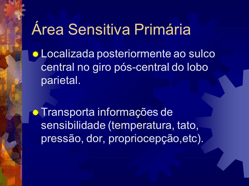 Área Sensitiva Primária