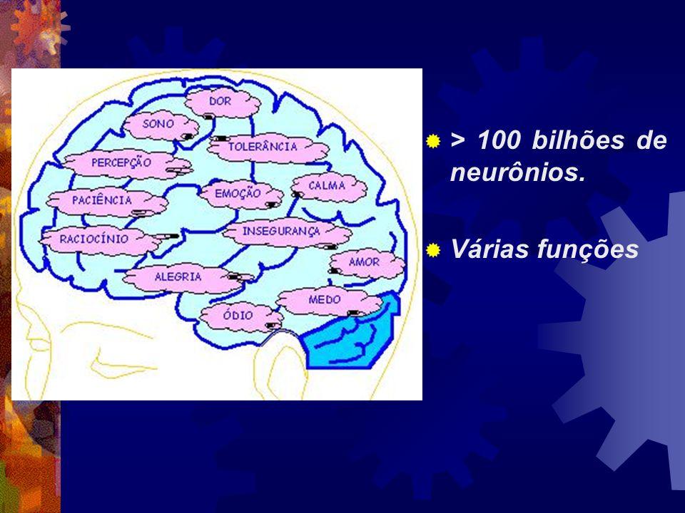 > 100 bilhões de neurônios.