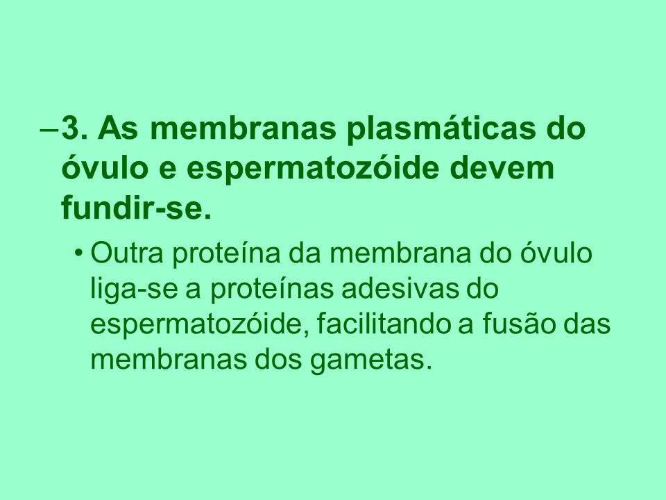 3. As membranas plasmáticas do óvulo e espermatozóide devem fundir-se.