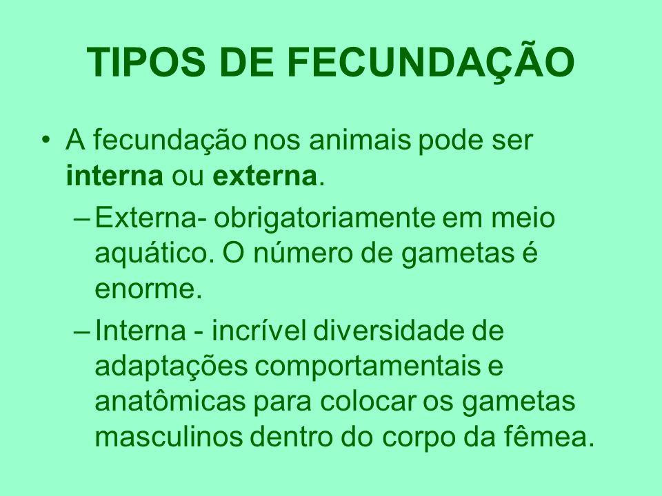 TIPOS DE FECUNDAÇÃO A fecundação nos animais pode ser interna ou externa. Externa- obrigatoriamente em meio aquático. O número de gametas é enorme.