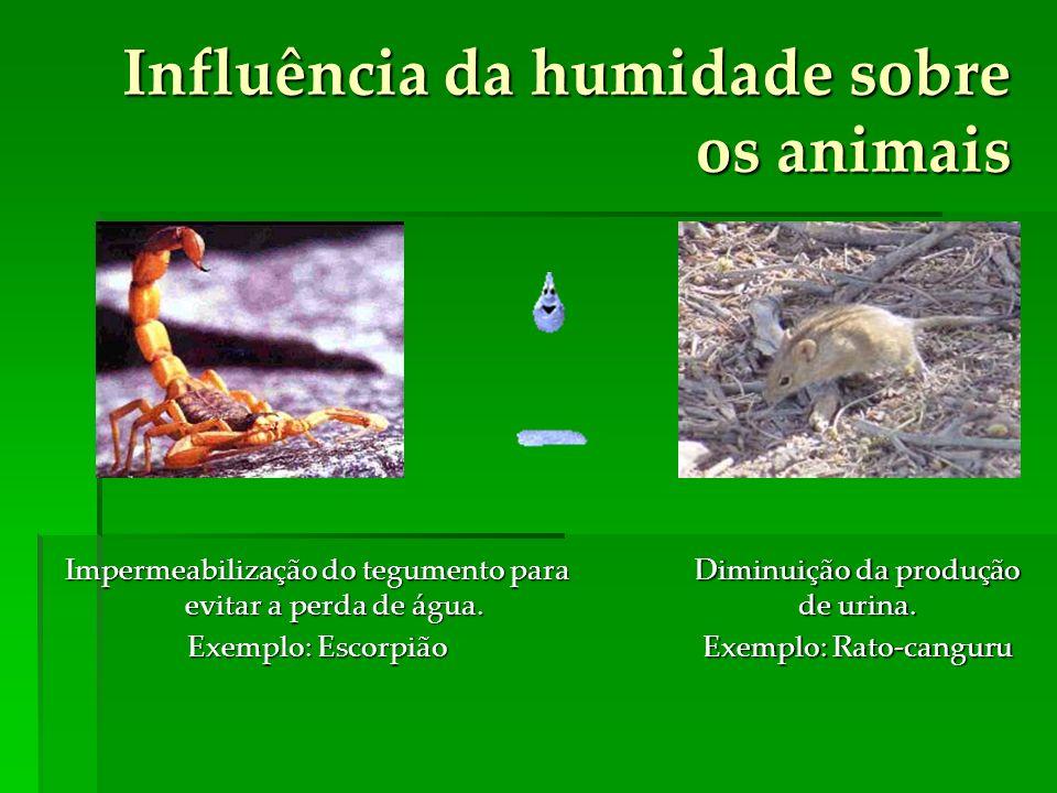 Influência da humidade sobre os animais