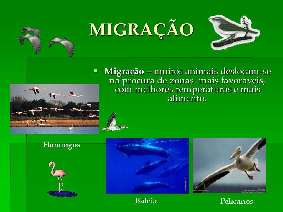 MIGRAÇÃO Migração – muitos animais deslocam-se na procura de zonas mais favoráveis, com melhores temperaturas e mais alimento.
