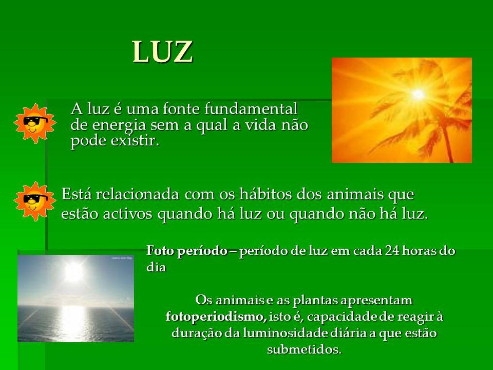 LUZ A luz é uma fonte fundamental de energia sem a qual a vida não pode existir.