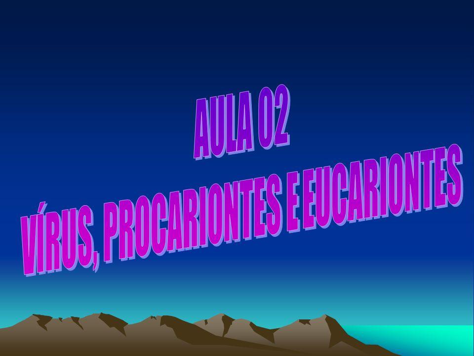 VÍRUS, PROCARIONTES E EUCARIONTES