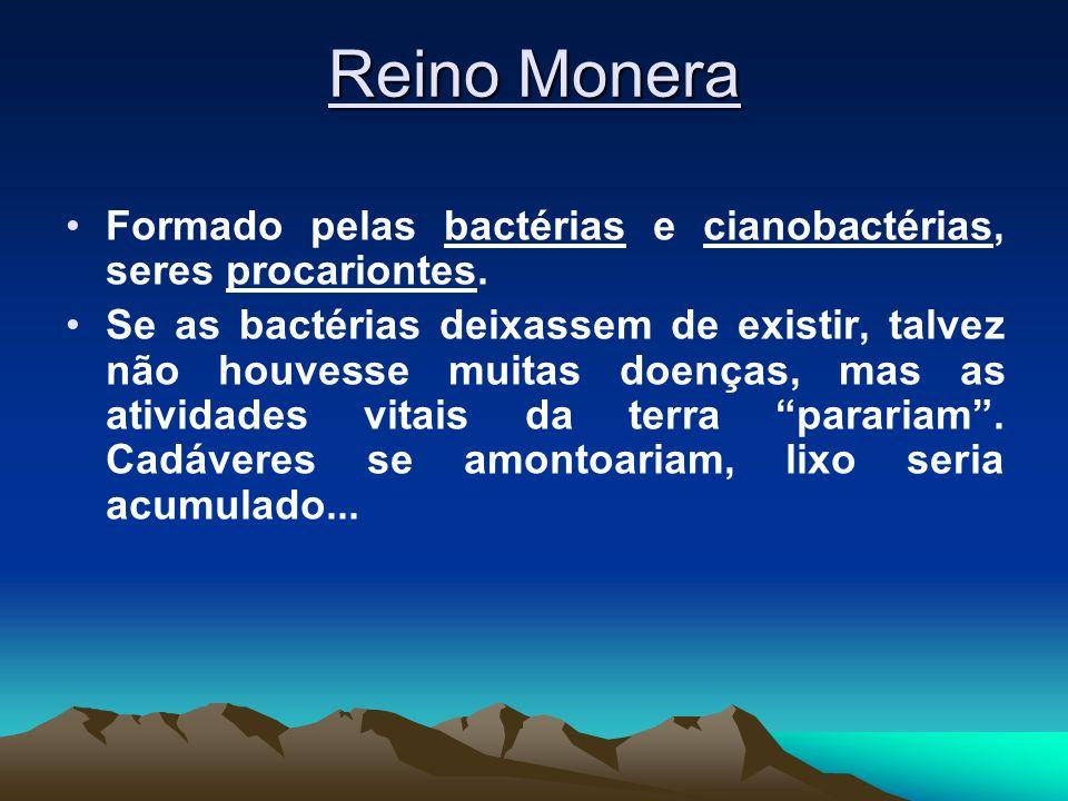 Reino MoneraFormado pelas bactérias e cianobactérias, seres procariontes.