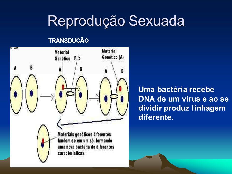 Reprodução Sexuada TRANSDUÇÃO.