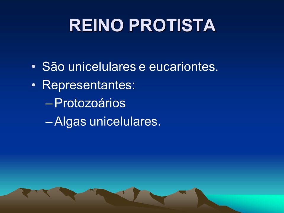 REINO PROTISTA São unicelulares e eucariontes. Representantes: