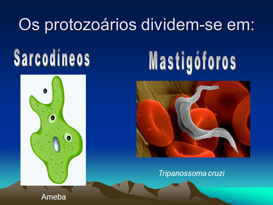 Os protozoários dividem-se em: