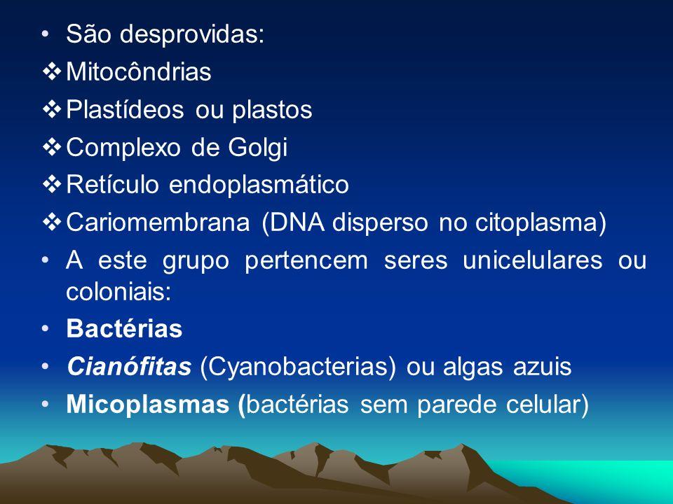 São desprovidas: Mitocôndrias. Plastídeos ou plastos. Complexo de Golgi. Retículo endoplasmático.