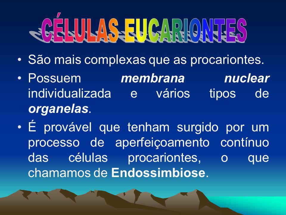 CÉLULAS EUCARIONTES São mais complexas que as procariontes.