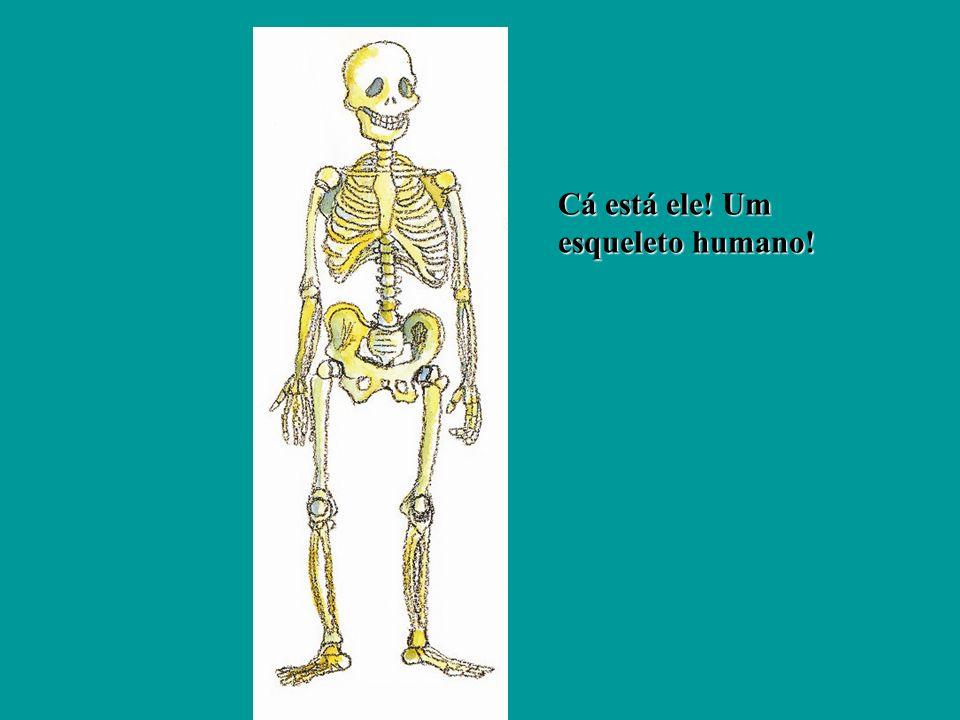 Cá está ele! Um esqueleto humano!