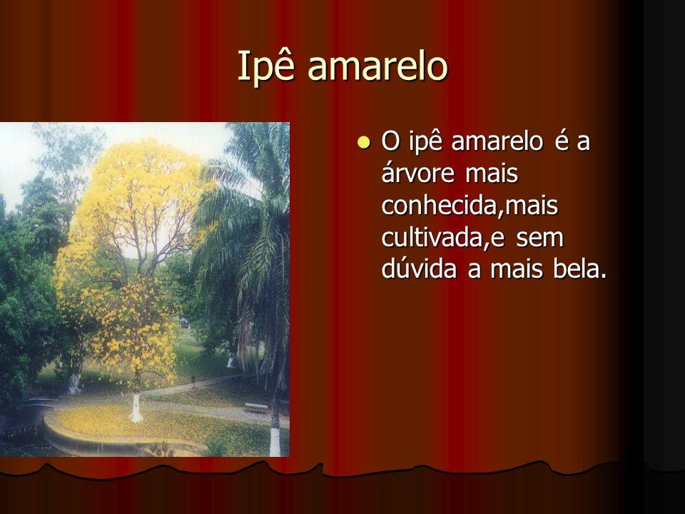 Ipê amarelo O ipê amarelo é a árvore mais conhecida,mais cultivada,e sem dúvida a mais bela.