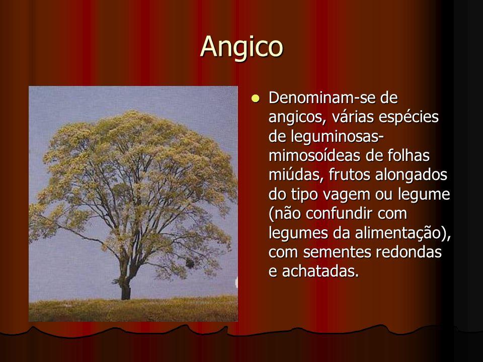 Angico
