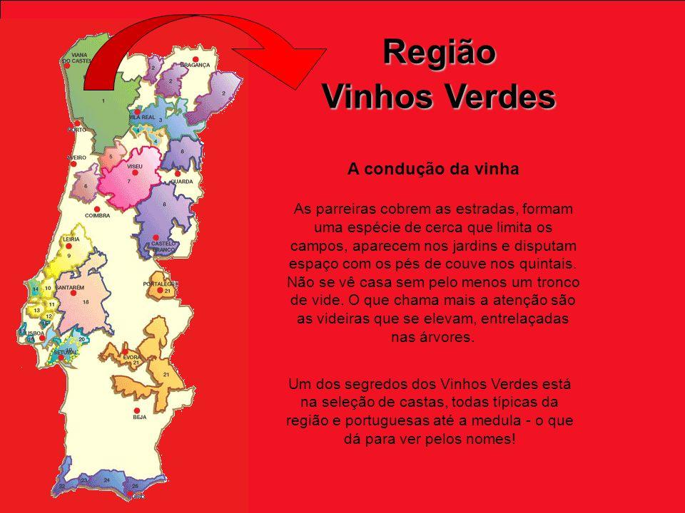 Região Vinhos Verdes A condução da vinha