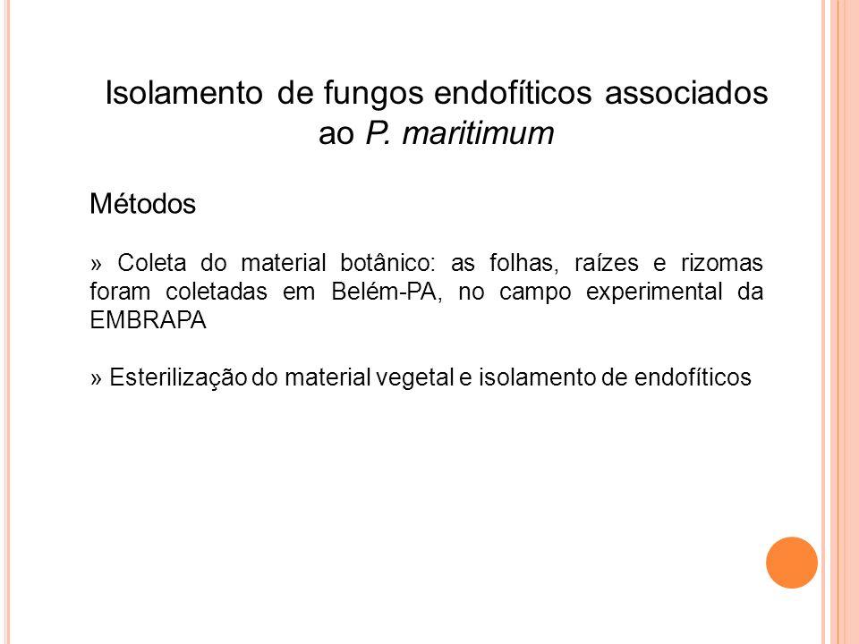 Isolamento de fungos endofíticos associados ao P. maritimum