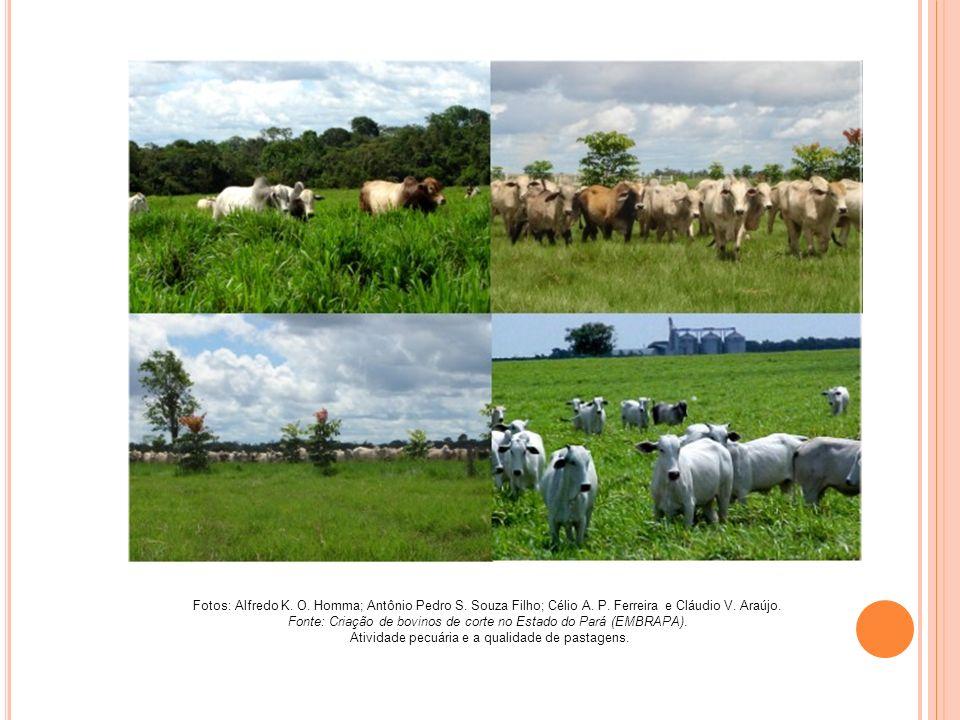 Fonte: Criação de bovinos de corte no Estado do Pará (EMBRAPA).