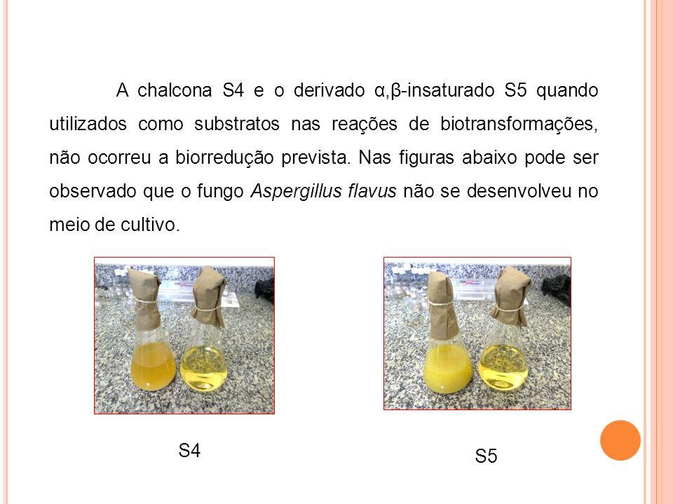 A chalcona S4 e o derivado α,β-insaturado S5 quando utilizados como substratos nas reações de biotransformações, não ocorreu a biorredução prevista. Nas figuras abaixo pode ser observado que o fungo Aspergillus flavus não se desenvolveu no meio de cultivo.