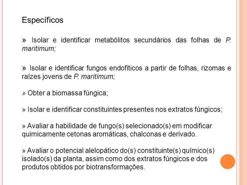 Específicos » Isolar e identificar metabólitos secundários das folhas de P. maritimum;