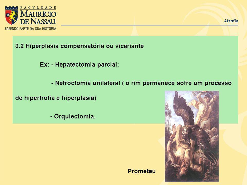 3.2 Hiperplasia compensatória ou vicariante