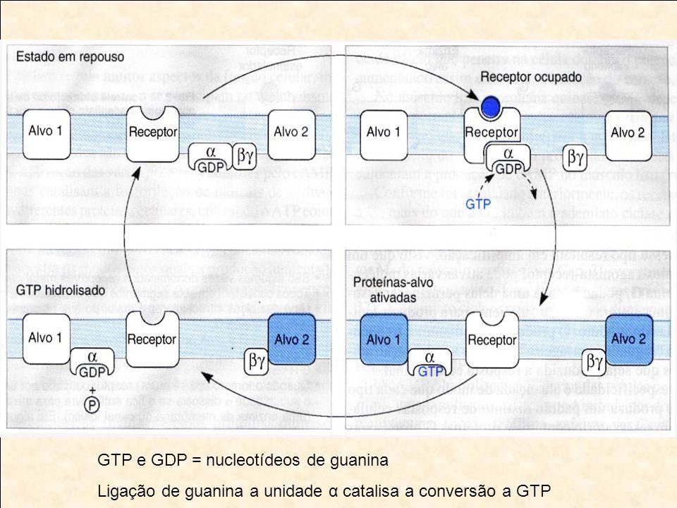 GTP e GDP = nucleotídeos de guanina