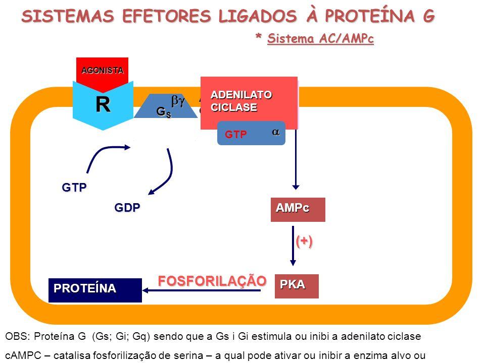 R SISTEMAS EFETORES LIGADOS À PROTEÍNA G  (+) FOSFORILAÇÃO