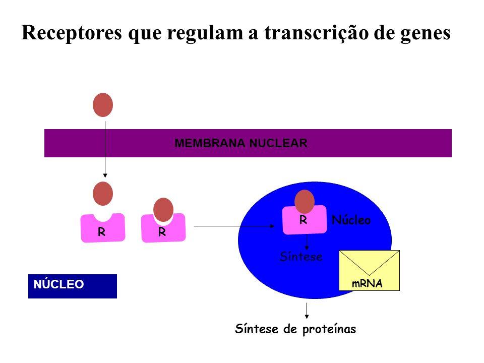 Receptores que regulam a transcrição de genes