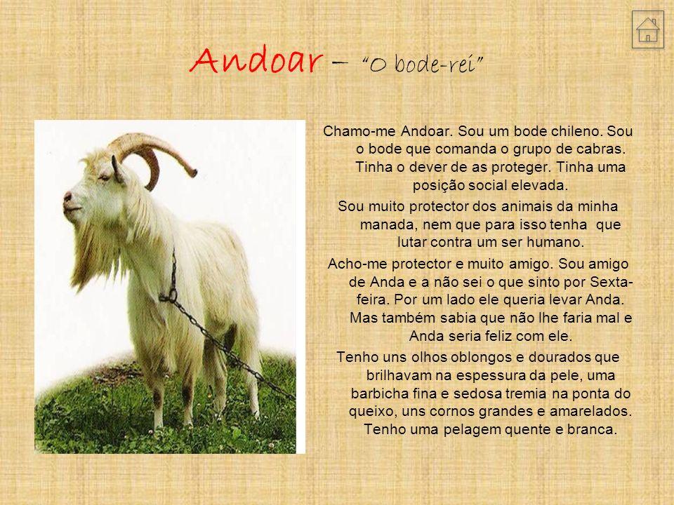 Andoar – O bode-rei