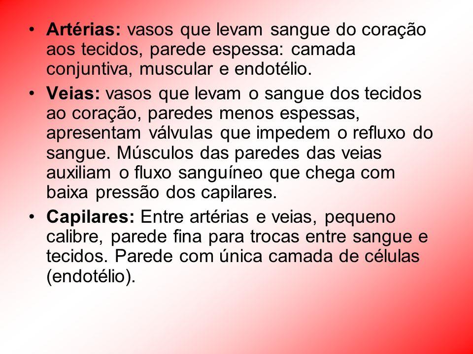 Artérias: vasos que levam sangue do coração aos tecidos, parede espessa: camada conjuntiva, muscular e endotélio.