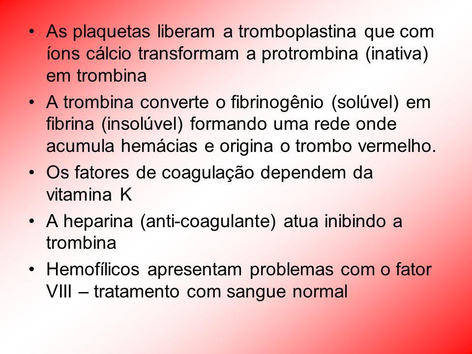As plaquetas liberam a tromboplastina que com íons cálcio transformam a protrombina (inativa) em trombina