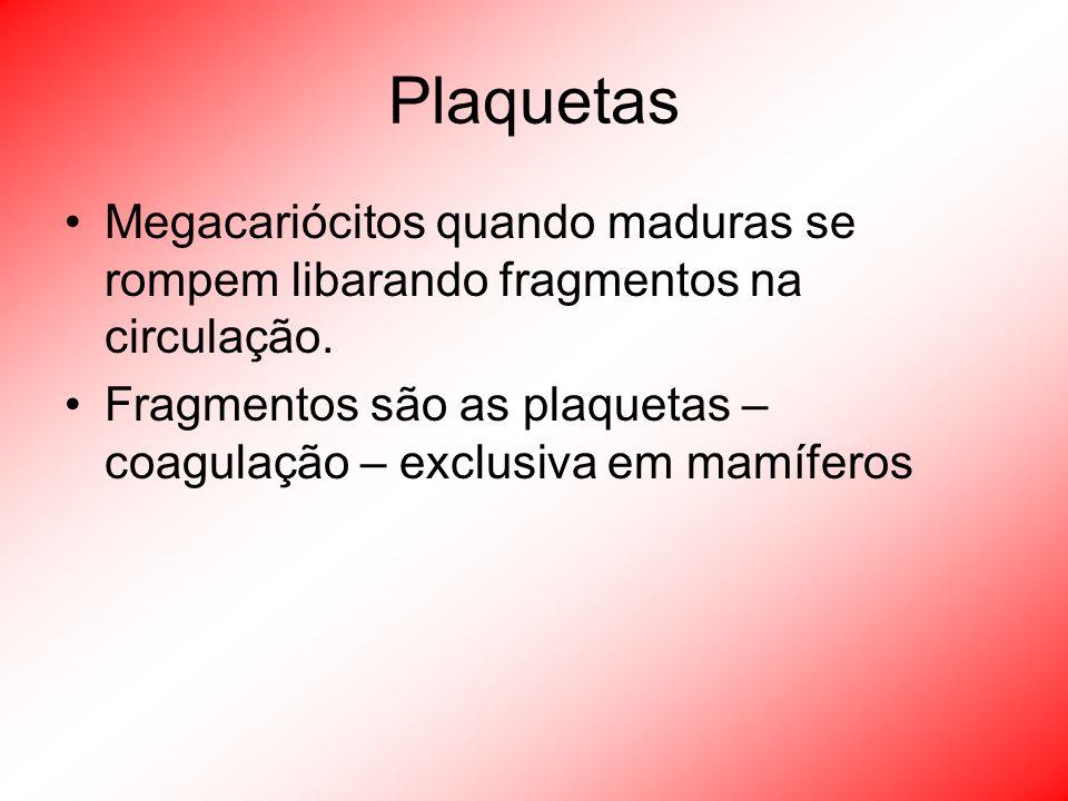 Plaquetas Megacariócitos quando maduras se rompem libarando fragmentos na circulação.