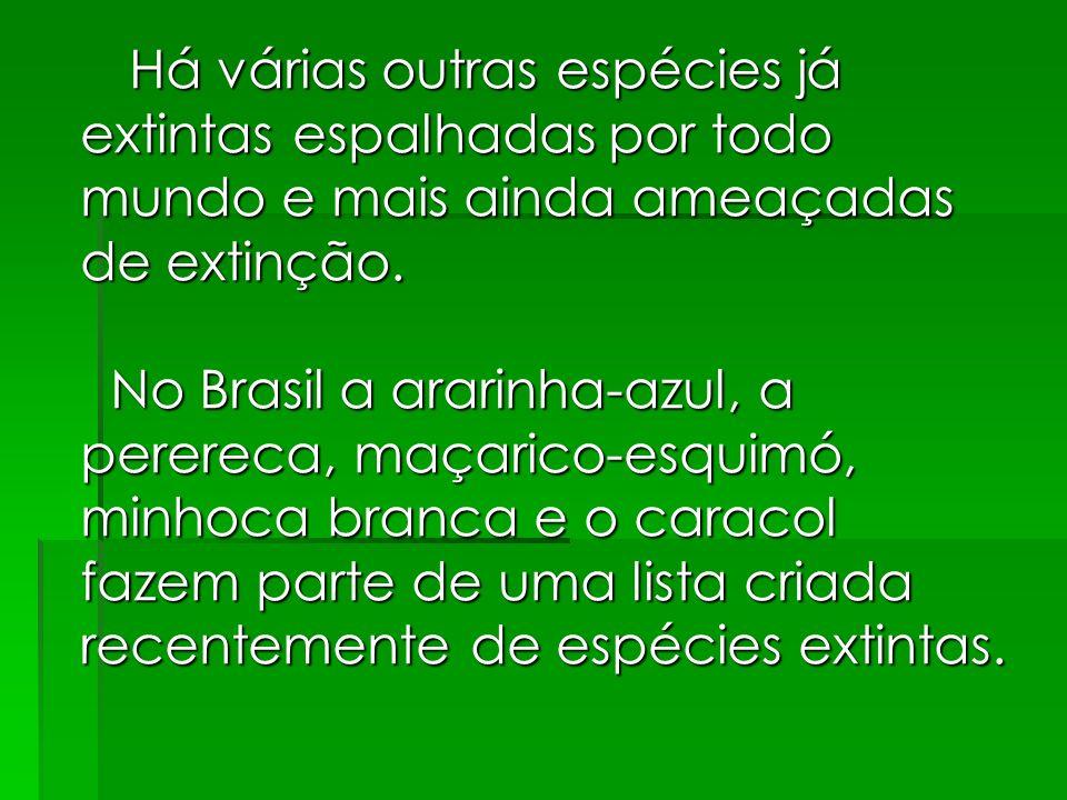 Há várias outras espécies já extintas espalhadas por todo mundo e mais ainda ameaçadas de extinção.