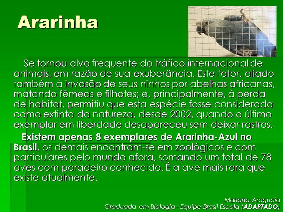 Ararinha