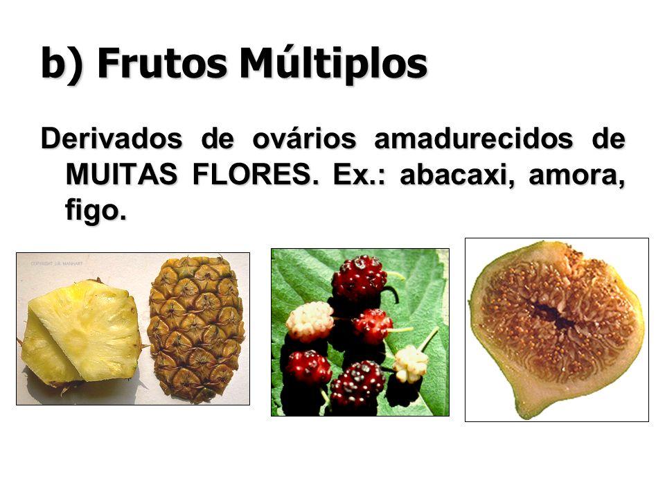 b) Frutos Múltiplos Derivados de ovários amadurecidos de MUITAS FLORES. Ex.: abacaxi, amora, figo.