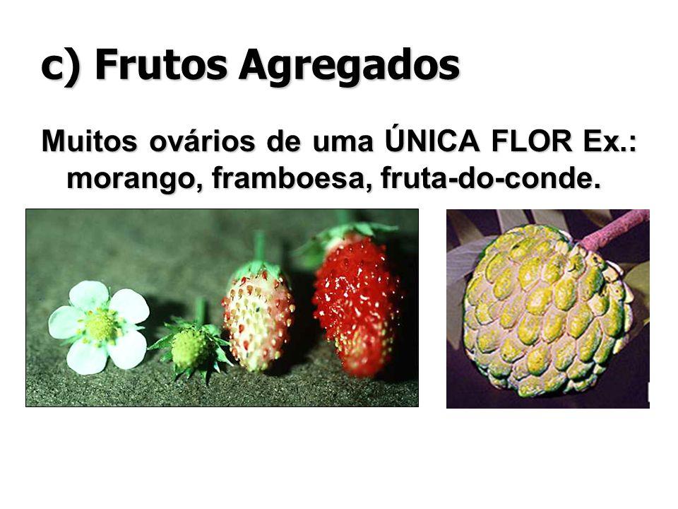 c) Frutos Agregados Muitos ovários de uma ÚNICA FLOR Ex.: morango, framboesa, fruta-do-conde.