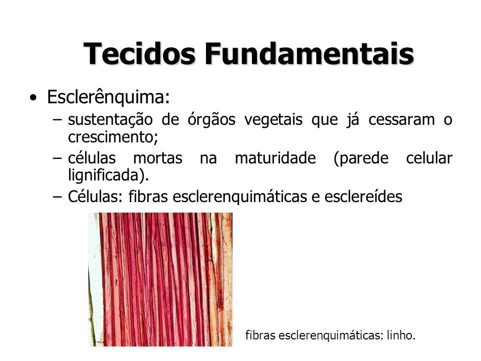 Tecidos Fundamentais Esclerênquima:
