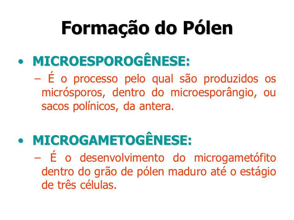 Formação do Pólen MICROESPOROGÊNESE: MICROGAMETOGÊNESE: