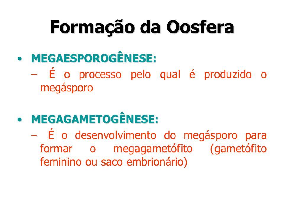 Formação da Oosfera MEGAESPOROGÊNESE: