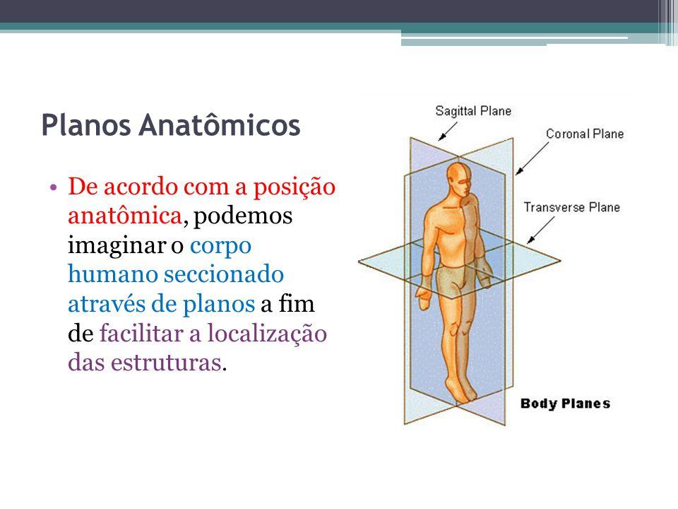 Planos Anatômicos